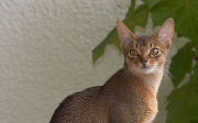 Odčervování koťat