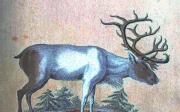 Lov jelena