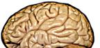 Mozek vdobré kondici