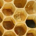 Alergie na propolis