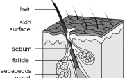 Rady na rychlejší růst vlasů