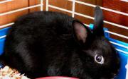 Zakrslý králík - strava
